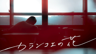 『カランコエの花』無料で動画を観る方法!アイキャッチ画像